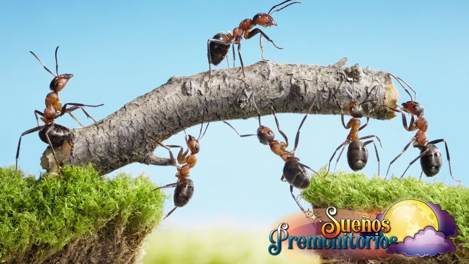 sonar con hormigas trabajadoras
