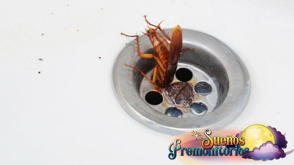 sueno con cucaracha