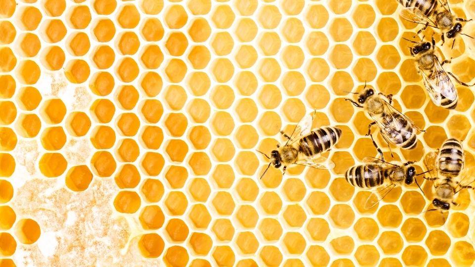 un sueno con abejas