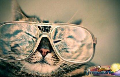 sonar con gatos