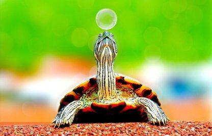 sonar con tortugas