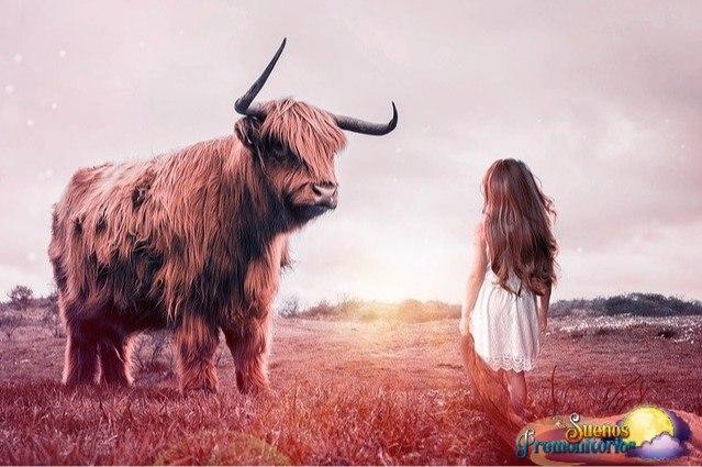 sonar con toros