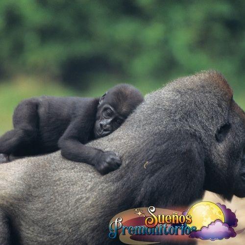 gorila y su madre