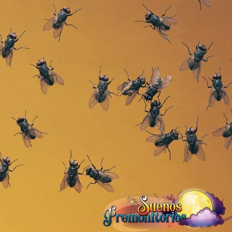 sueno con muchas moscas