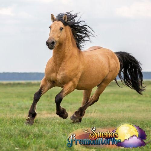 caballo de la suerte