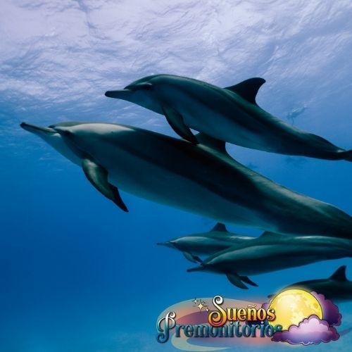 los delfines en los suenos
