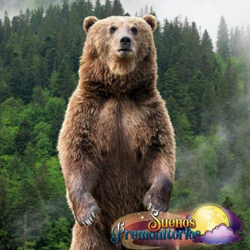oso de la suerte