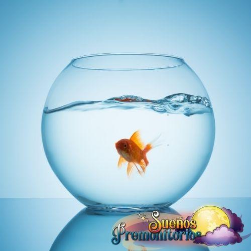 pez dorado de la suerte