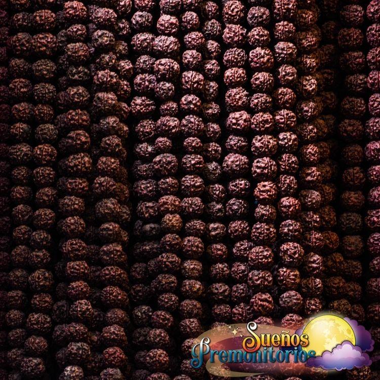 Semillas de Rudraksha