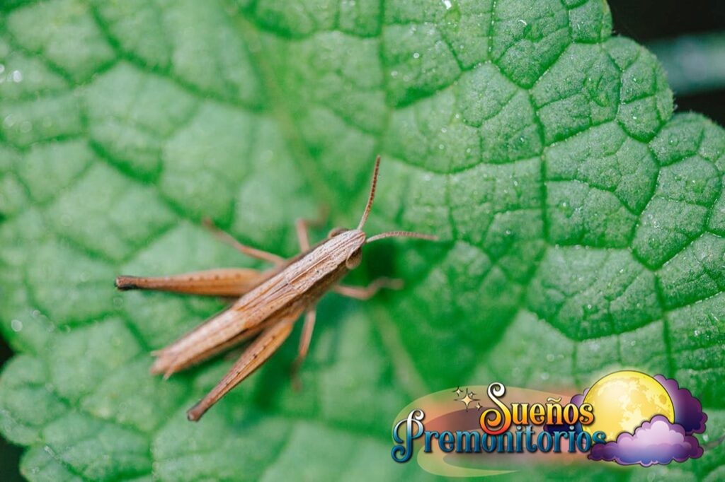 Sonar con insectos significado