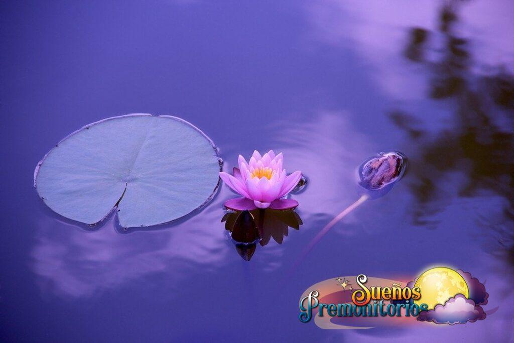Flor de loto significado
