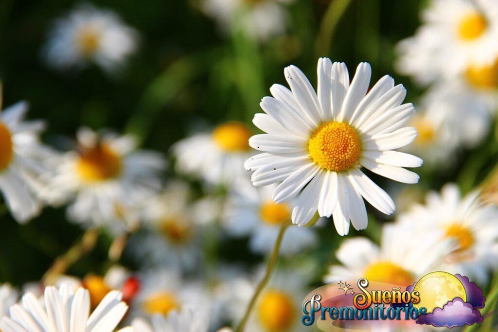 soñar con flores blancas que significa